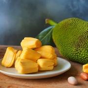 Tropical Jackfruit
