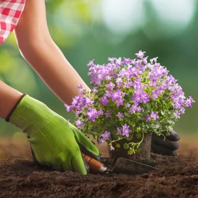 Planting Flowers in Garden